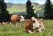 Sistema qualità nazionale e benessere animale